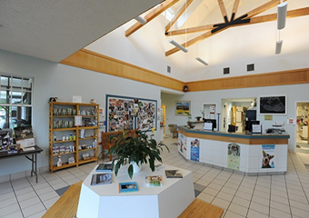 offshore animal hospital pet friendly veterinarian nantucket